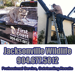 Jacksonville Pest Control, Animal Trapping, Wildlife Removal